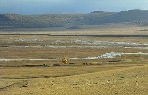 Mongolian_steppe - wiki